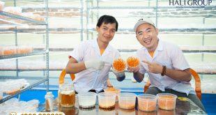 Đại lý bán đông trùng hạ thảo khô Kim Cương Vàng hộp 10g của Tiến Luật